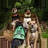 Tile - doc dogs 100pxls